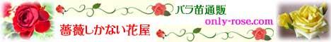 薔薇しかない花屋