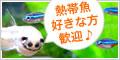 熱帯魚購入初心者におすすめ!【水槽屋.com】商品購入