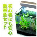 熱帯魚購入初心者におすすめ!【水槽屋.com】